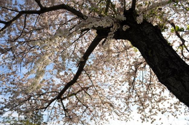 spring blooms, change